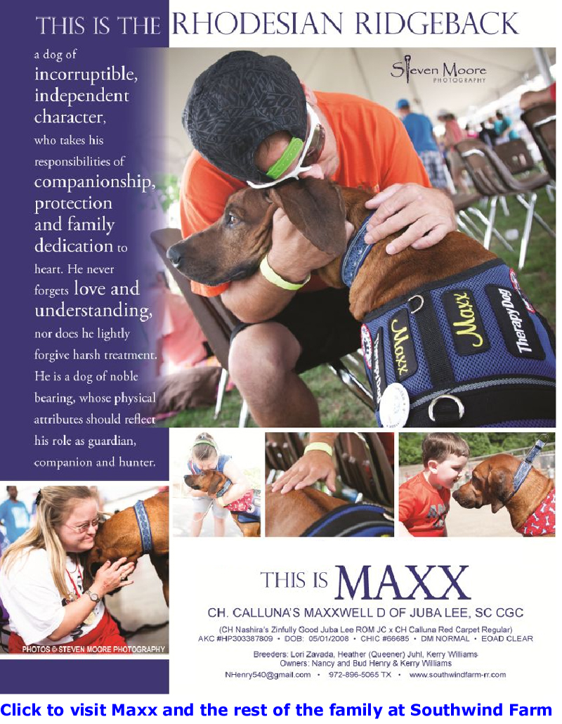 Rhodesian Ridgeback, Maxx the Therapy Dog Advert by Nancy Henry and Steven Moore Photography