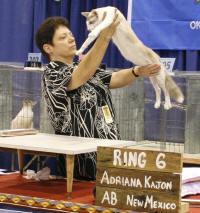 JUDGING A CAT SHOW