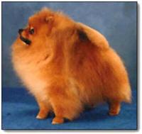 Bi-Mar Pomeranians - Mary Rosenbaum