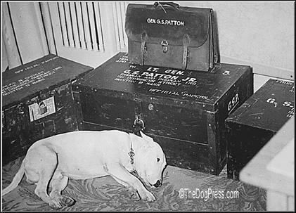 Willie, General Patton's Bull Terrier