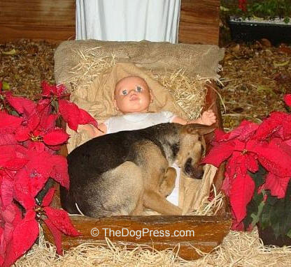 Why A Puppy For Christmas Symbolizes The Meaning Of Love