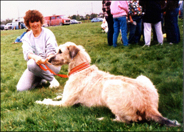 Kate at her first coursing trial in Canada