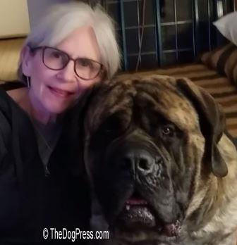 American mastiff lawsuit