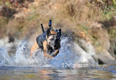 """K-9 WAR DOGS ARE REAL """"WORKING DOGS"""" ON LAND AND WATER"""
