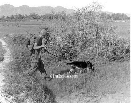 """War Dog from Vietnam war, scout dog """"Chief"""" on patrol"""
