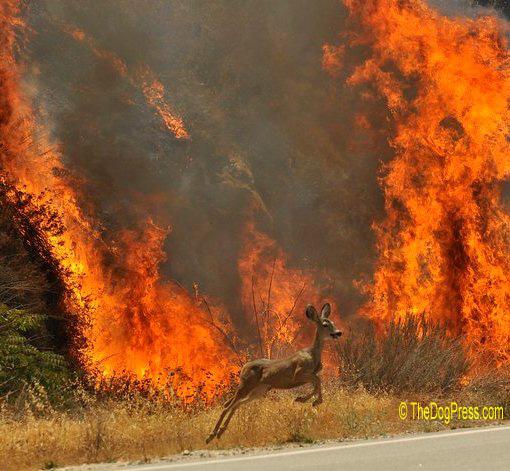forest fire animals wwwpixsharkcom images galleries