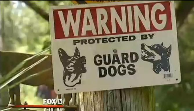 """Gloger shows her obedience trained Rottweilers and depends on them for protection. Her posted property is securely fenced with numerous signs warning against entering the property protected by """"Guard Dogs"""""""